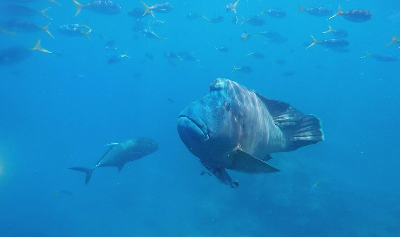 Plongée avec des macros en Australie