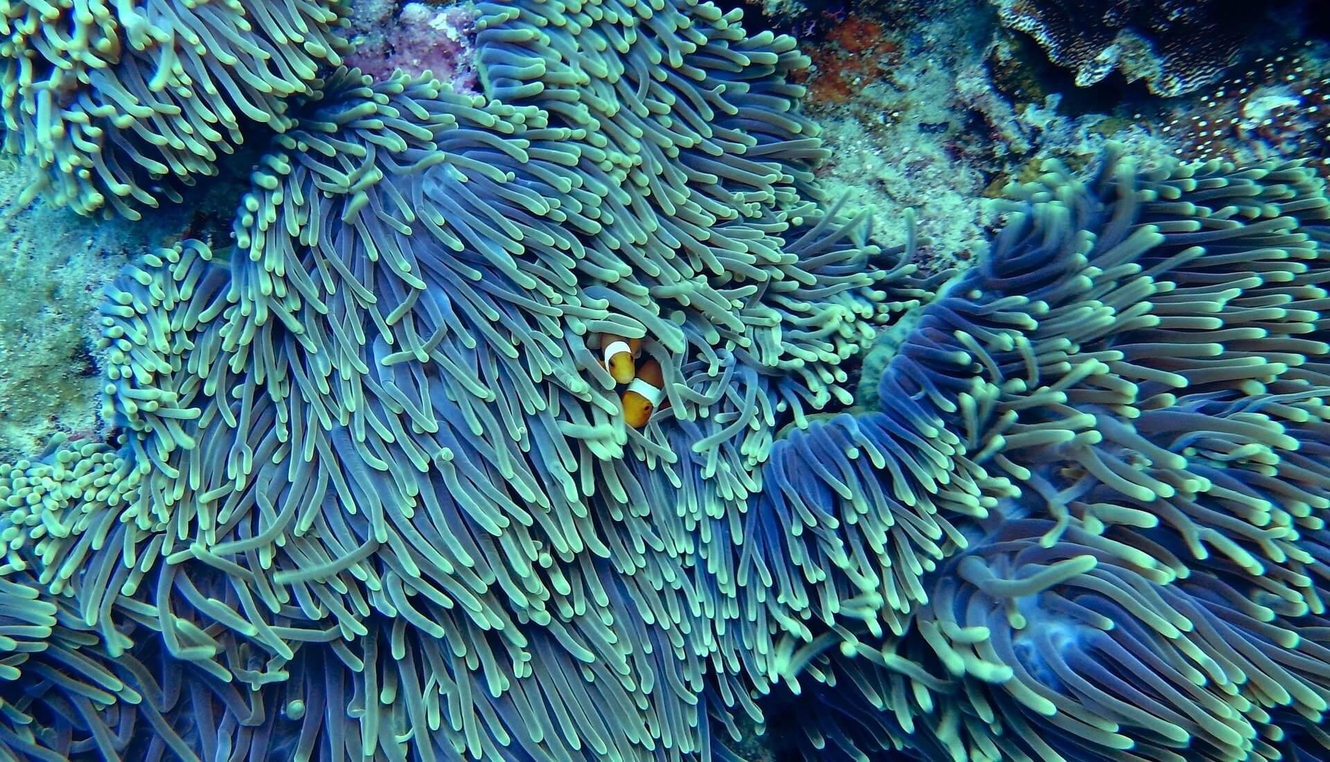 Île de pins coraux