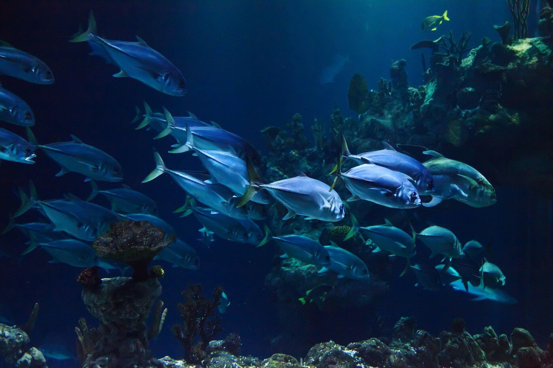Banc de poisson en Nouvelle-Calédonie