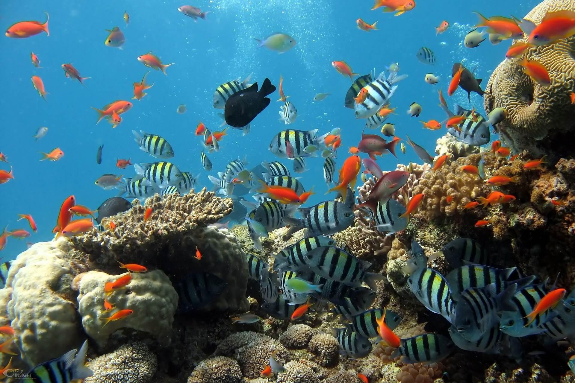 Récif avec des poissons de la Grande Barrière de Corail