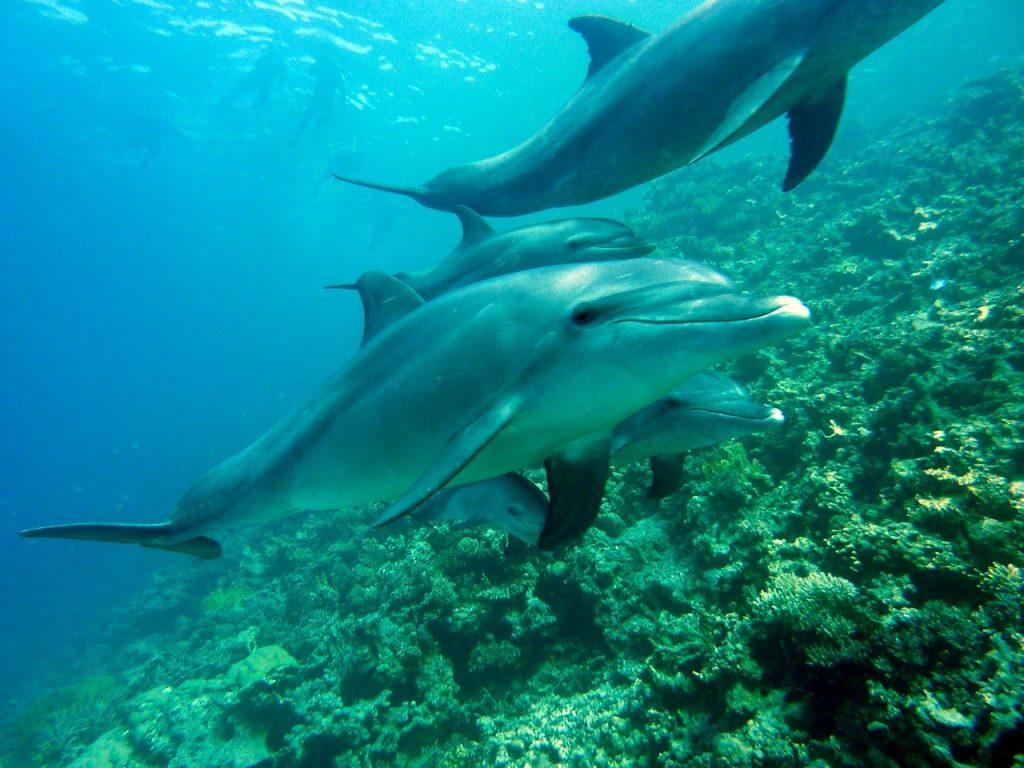 Plonger avec des dauphins