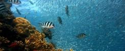Banc de poisson